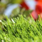 spring 80 artificial turf 4