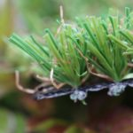 syntheticgrass star grass 351407